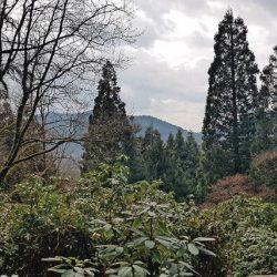 Exotenwald verzaubert die Besucher